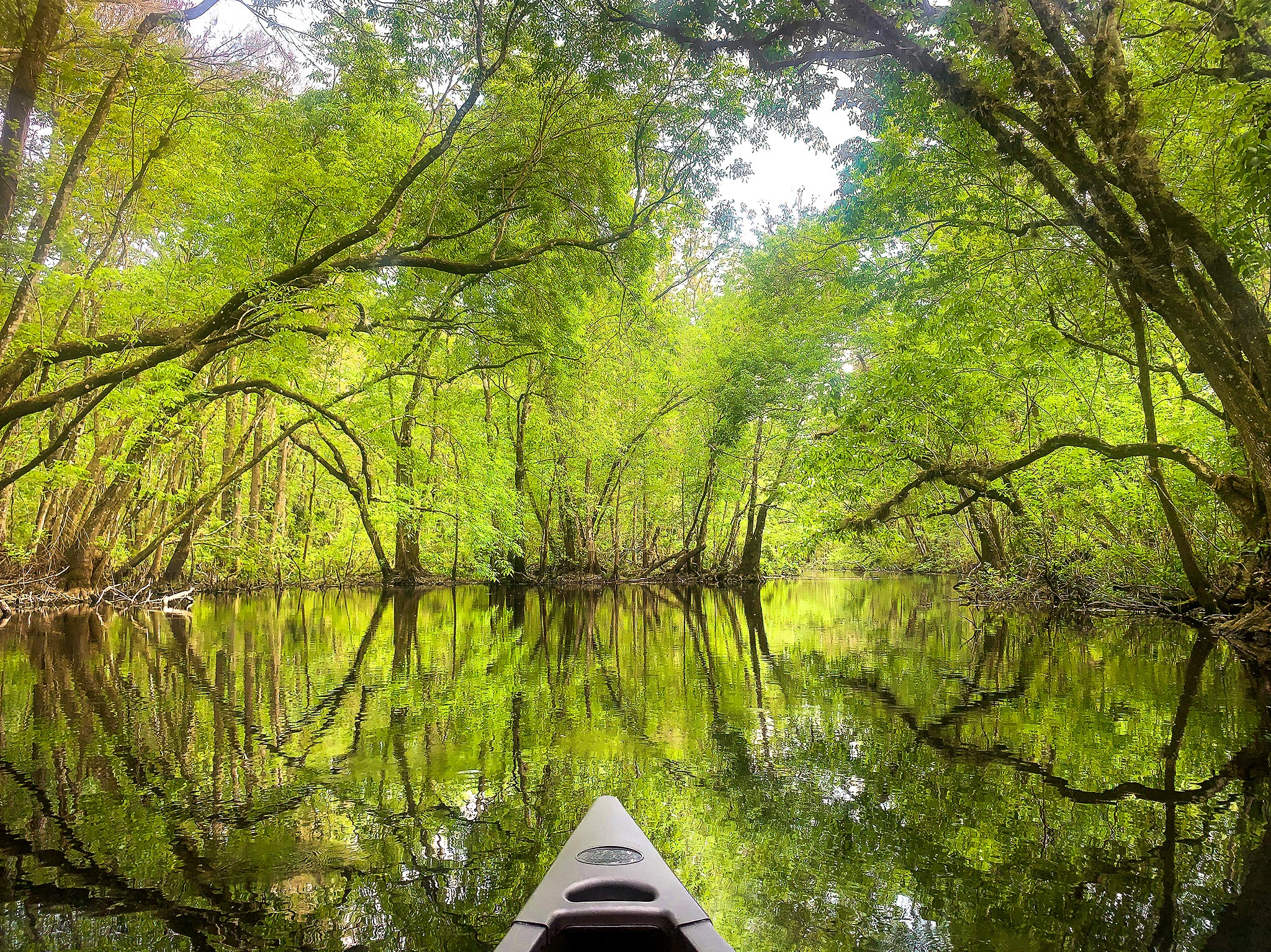 Canoeing on Gum Slough